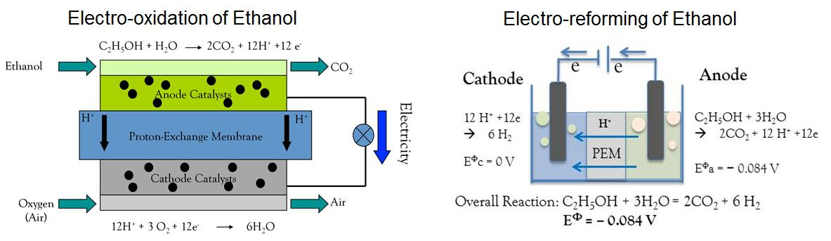 the oxidation of ethanol essay The oxidation of ethanol essay 715 words | 3 pages the oxidation of ethanol ethanol is a primary alcohol and can be oxidized to either an alderhyde or a carboxylic acid.